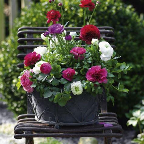 Blumenkästen Bepflanzen Ideen ideen bepflanzung balkonkasten