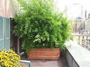 Bambus Auf Balkon : bambus im k bel als sichtschutz auf einem balkon g rtnern ~ Eleganceandgraceweddings.com Haus und Dekorationen