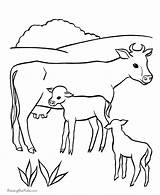Coloring Cows Herd Cattle Popular sketch template