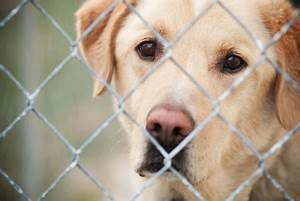 Top 5 reasons to adopt a dog from a shelter or rescue ...