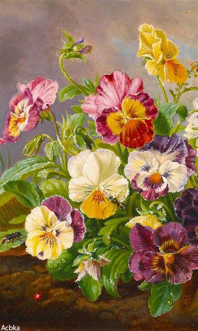 Flower Flowers Buke Flores Nexus Pansies Desktop