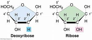 Nucleotides And Nucleic Acids