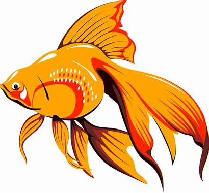 Fish Goldfish Pixabay Tank Vector Water Clip