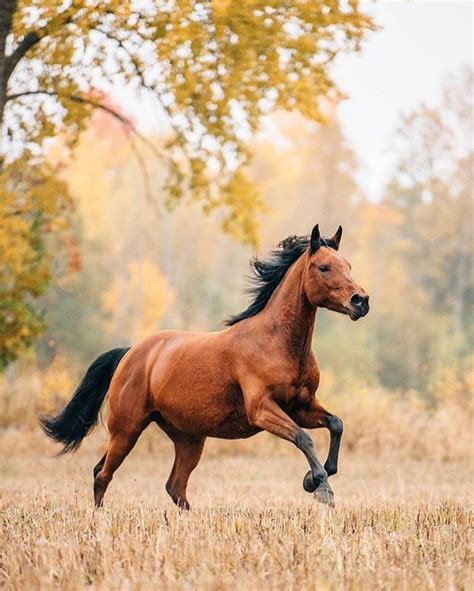 horse horses pony running dream wild animal meaning stallion word arabian coat