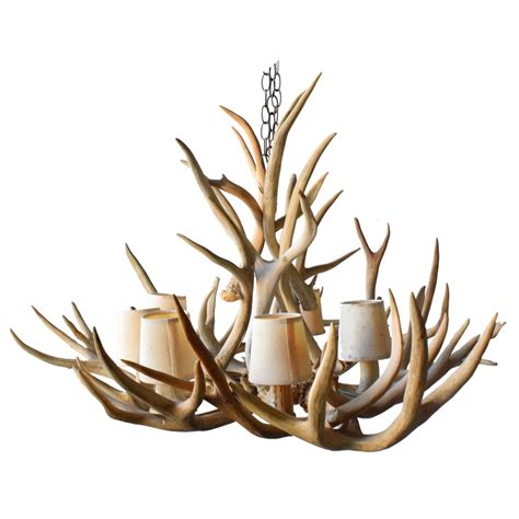 chandelier deer antler taxidermy mounts for sale and