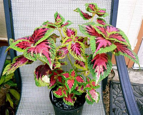 low light plants 14 low light house plants for your indoors indoor plants