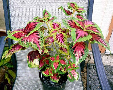 low light indoor plants 14 low light house plants for your indoors indoor plants