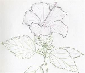 Hawaiian Flowers Pencil Drawings