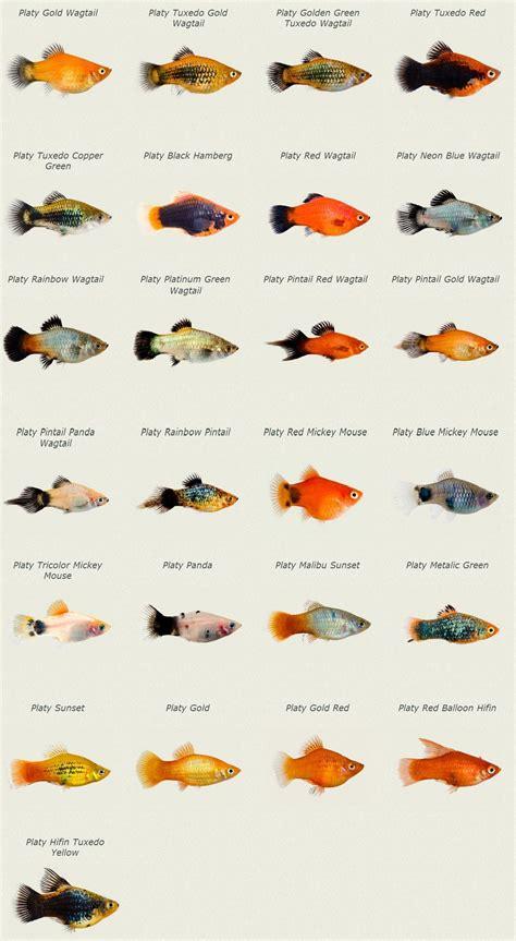 betta fish tank setup ideas that make a statement aquarium ideas aquariums and fish