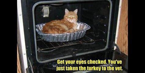 Thanksgiving Cat Meme - thanksgiving meme critters pinterest