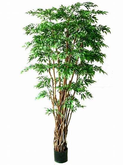 Tree Ruscus Multi Trunk Artificial Trees Plants