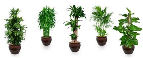 Top 10 Airpurifying Plants To Improve The Feng Shui Of