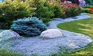 Bodendecker Blaue Blüten : bodendecker isotoma blue foot groupon ~ Frokenaadalensverden.com Haus und Dekorationen