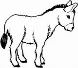 Mule Coloring Template Cartoon sketch template