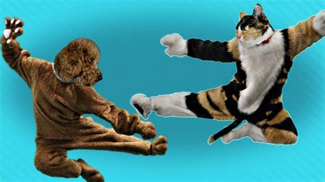 Cat Vs Dog Kung Fu Battle  Pleated Jeans