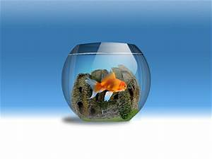 Just like the goldfish that is