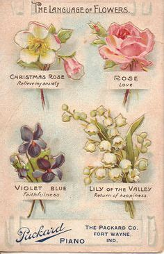 tussie mussies the language of flowers 1000 images about tussie mussies and the language of flowers herbs on pinterest language of