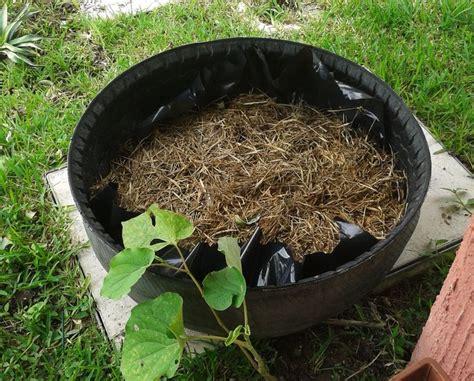cultivo de hortalizas en llantas recicladas con cama de compost y paja mi huerto plants y