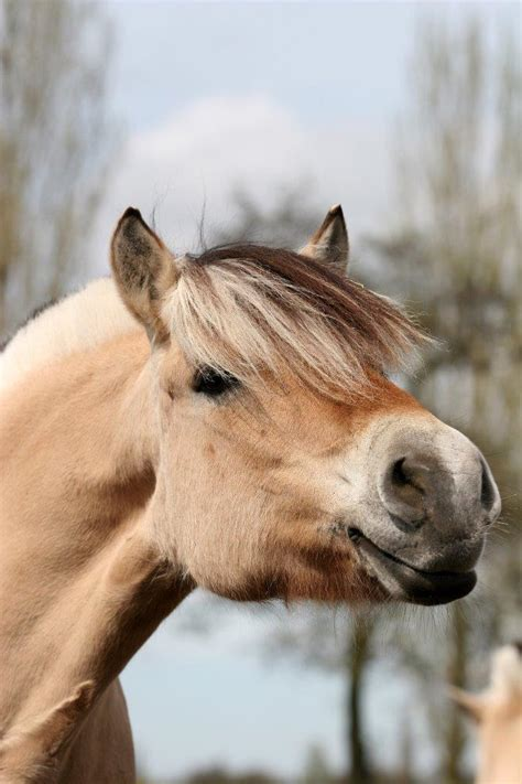 Onze Paarden & Pony's   Manege Groenesteyn
