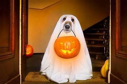 Dog Halloween Costumes Pet Cat Garden Indy100