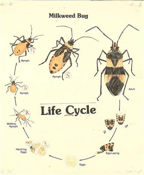 Moth Body Parts Diagram