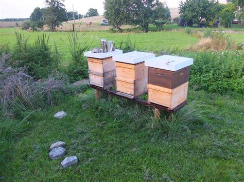 bienenvolk kaufen bienenvolk vereinigen im september aus zwei mach eins