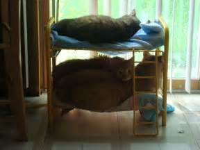 cat bunk beds my built my s cats bunk beds and they actually