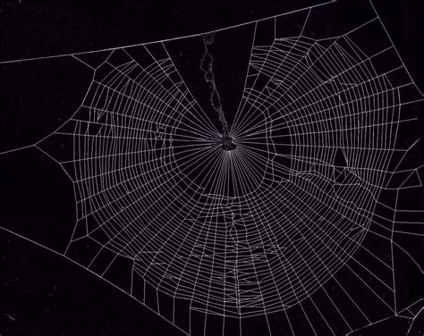 spiderweb wallpaper wallpapersafari