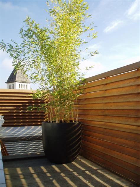 du bois sur les toits arborescence paysage