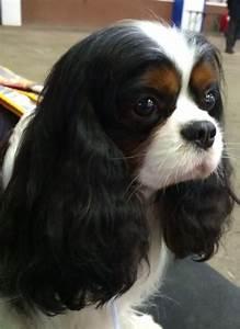 beauty   DOG GONE CUTE !!!....   Pinterest   Beautiful ...