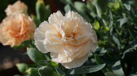 8 Arten Für Ein Blumen Paradies