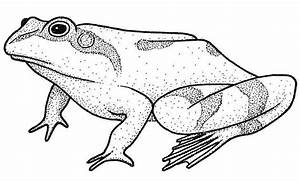 frog-drawing - stockholm - photohome