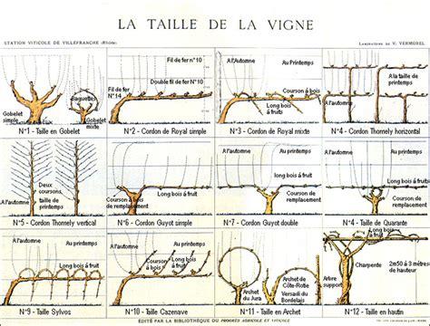 Tailler Une Treille De Raisin by La Taille De La Vigne Industries Via