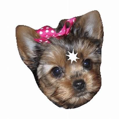 Dog Puppy Imoji Sticker Yorkie Giphy Tweet