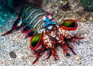 35 Most Colorful Animals in the World (Mammals, Birds ...