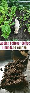 garden tip add leftover coffee grounds to your soil