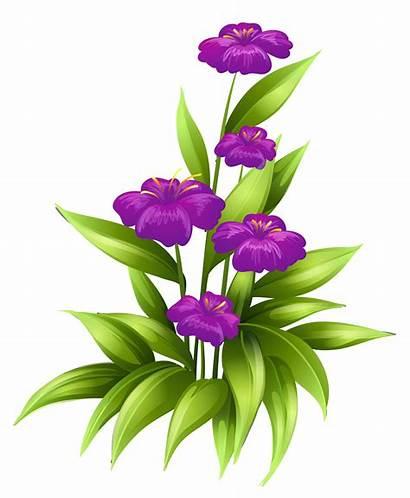 Flowers Purple Transparent Clipart Flower Clip Background