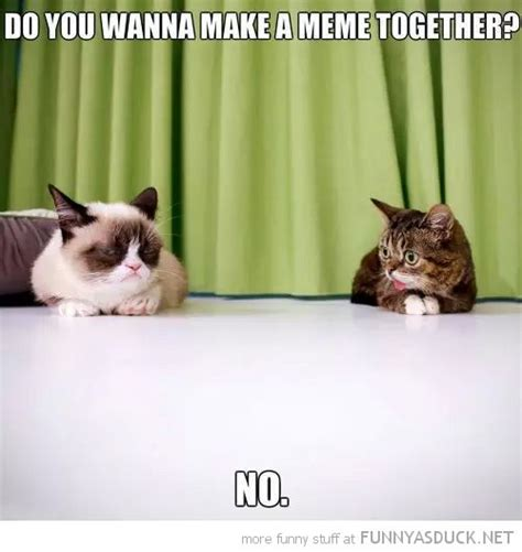 Tardar Sauce Meme - lil bub and tardar sauce in the life of lil bub pinterest