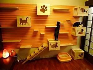 Casas y muebles dise?ados para los amantes de gatos
