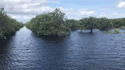 Groves Florida Orange Grove Arcadia Drowned Citrus