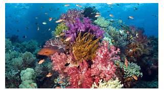 korallenriff leben Vektorgrafik - ForWallpaper com  Coral Reef Wallpaper 1920x1080