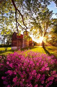Spring Beautiful Country Landscapes