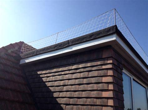 dormer roof systems seagull netting on dormer bird