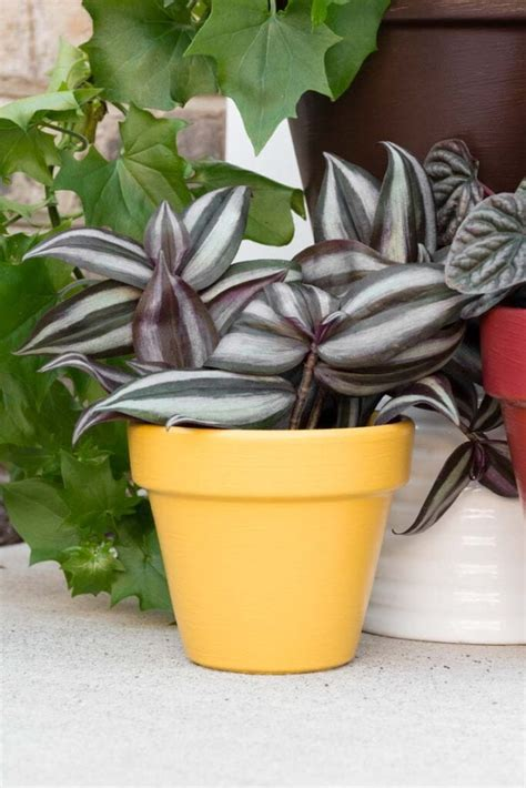 paint flower pots  outdoors easy fall front
