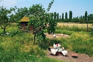 Hühner Im Garten : h hner brauchen freien auslauf b ume und str ucher vermitteln den tieren genug sicherheit zum ~ Markanthonyermac.com Haus und Dekorationen