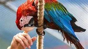 Otwarcie Papugarni w Galerii Rzeszów. Mnóstwo kolorowych ...