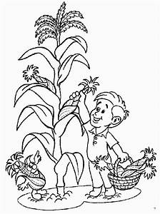 Free Pictures Of Corn Fields Coloring Pages
