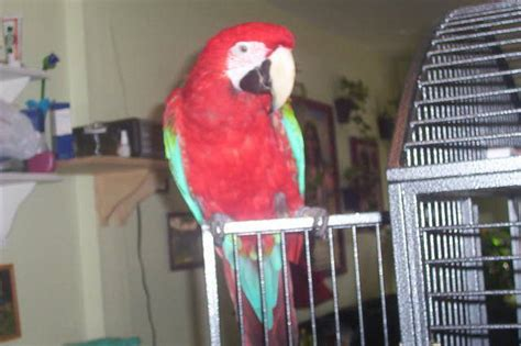 gift of god parrot rescue wanted from golden lake ontario