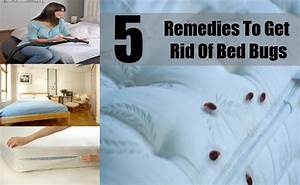5 best remedies to get rid of bed bugs easy ways to get With does washing get rid of bed bugs