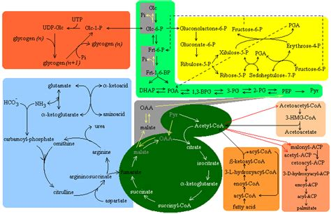a general overview of the major metabolic pathways